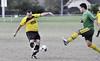 Young_CSY_7945 (youngie11) Tags: pen football aa12 gladesvillehornsbyfootballassociation eppingeastwoodfootballclub eewfc eppingeastwood eppingeastwoodtigers season2013 allage12 pennanthillsfootballclub