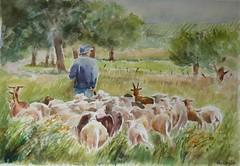 Ardèche: aquarelle, monsieur B et son troupeau (geneterre69) Tags: aquarelle annimaux moutons campagne ardèche