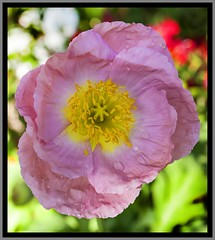 Toowoomba Flowers-034=