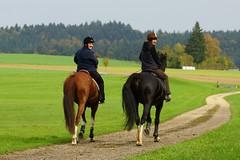DSC04491_o_s (AndiP66) Tags: distanzritt roggliswil 2013 oktober luzerner hinterland reiten pferde andreaspeters equestrian sport sports tamron 70200mm f28 sp di ld if macro