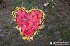 Autumn Love (TammyLynnPhotography) Tags: autumn heart arboretum gloucestershire westonbirt tammylynncouk
