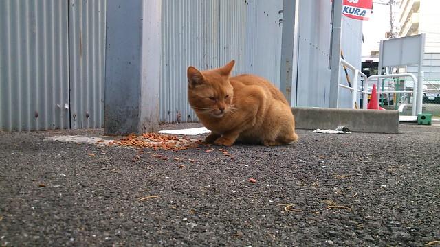 Today's Cat@2013-11-02