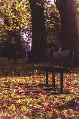 Warm sunshine on the benches (Tom Insole Photography) Tags: autumn trees light shadow black leaves sunshine canon bench season 50mm golden leaf glow rays f18 efs ef casting fifty nifty canon50mm lightcast niftyfifty 50mmf18ii 40d canon40d