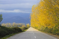light against the yellow wall .... (Simos1968) Tags: autumn perspective roadtonowhere yellowtrees