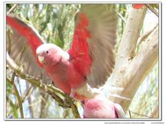 IMG_1792 (jk1668) Tags: ocean portrait sky lake bird nature birds animal canon lens birding flight australia explore swamp tele birdwatcher sx50