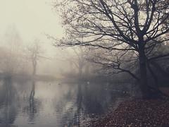 More Fog (peterphotographic) Tags: wood uk england reflection tree london water fog forest britain olympus wanstead walthamstow eastlondon snaresbrook hollowponds microfourthirds epl5 pc110949cb2gauzyedwm
