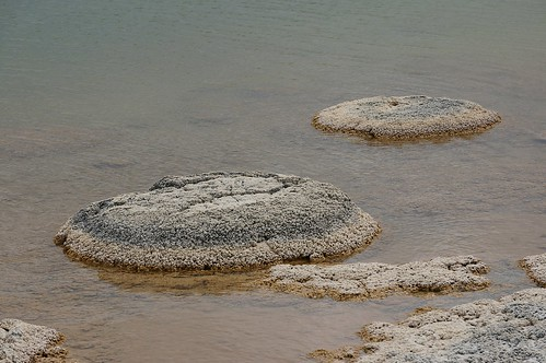 Stromatolites at Lake Thetis (3)