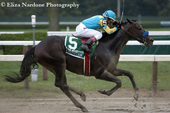 Paynter (Eliza Nardone Photography, LLC) Tags: horse out groom code flat saratoga honor racing alpha racecourse thoroughbred equine paynter strapping nyra
