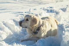 Snowdog - A winter Wonderland (Valsugana) (Pablo Apiolazza) Tags: travel winter italy food mountain snow video holidays lifestyle hidden cinematography wonderland traveldestinations valsugana italytravel ttot apzmedia tbdex tdbex