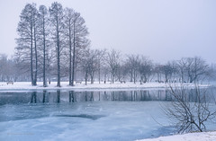 Fresh snow (Dominic Cristofor) Tags: blue trees lake snow reflection ice 35mm landscape fuji noflash romania fujifilm bucharest waterscape x100