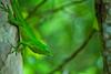 lizard (mak_9000) Tags: tree green eyes reptile lizard scales treebark specanimal
