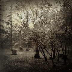Yearning XIX (William Flowers) Tags: trees cemetery memories memory dreams
