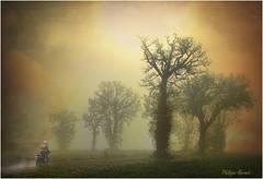 Chapelle Royale - Eure & Loir 2013 (Philippe Hernot) Tags: chapelleroyale eureloir 28 france philippehernot kodachrome landscape trees jaune yellow brouillard fog sunset nature nikond700 nikon posttraitement