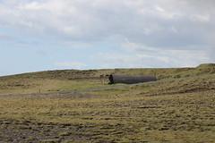 (frettir) Tags: island iceland reynisfjall