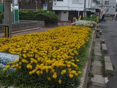道ばたの花壇