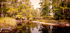Fisheating Creek before the Summer Rains (BobHartmannPhotography) Tags: unitedstates florida hdr palmdale 1365 bobhartmann wwwbobhartmanncom bobhartmannphotography