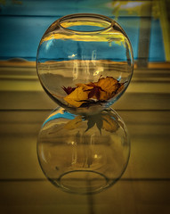 Reflections on Fading Gold (Remarkable Imagery) Tags: autumn leaves bowl glassreflection creativeshoot