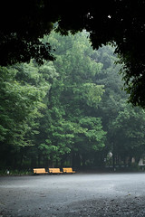 After the drizzle (- yt -) Tags: park green nature rain japan tokyo monsoon 日本 東京 緑 meguro 梅雨 目黒 林試の森公園 xf35mm fujifilmxe1