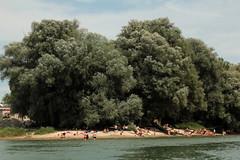 Sandstrand am Dreispitz der untere Auinsel am Rheinufer - Ufer des Rhein ( Hochrhein - Fluss - River ) in der Gemeinde Albbruck im Bundesland Baden - Wrttemberg in Deutschland (chrchr_75) Tags: chriguhurnibluemailch christoph hurni chrchr chrchr75 chrigu chriguhurni juli 2015 hurni150712 schweiz suisse switzerland svizzera suissa swiss juli2015 albumzzz201507juli rhein rhin reno rijn rhenus rhine rin strom europa albumrhein fluss river joki rivire fiume  rivier rzeka rio flod ro