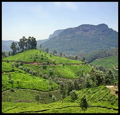 Munnar : Top Station (indianature13) Tags: india mountain lake nature tea kerala april westernghats munnar 2015 topstation kundalalake madupettylake indianature sholaforest highranges