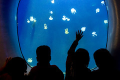 Kids watching the jellyfish at the Atlanta Aquarium (Isaac M. (Halifax)) Tags: kids jellyfish aquarium blue