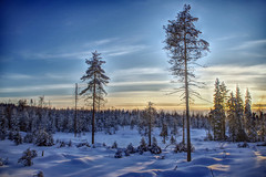 Pehku (STTH64) Tags: pehku tahko forest trees sun sunset sky clouds winter hdr pentaxk1 coolblue finland