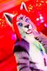 _MG_0720 (Tiger_Icecold) Tags: confuzzled cfz2016 cf2016 furcon furry convention fursuit birmingham party deaddog ddp deaddogparty