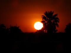 Sunset Palm (Scott Douglas Worldwide) Tags: az arizona awesome america sky s sunrays smiling sun sunset sexy sunrise p perfect peaceful paradise palmtree palm palms palmtress pretty beautiful badass b bright yumaaz yuma y yy