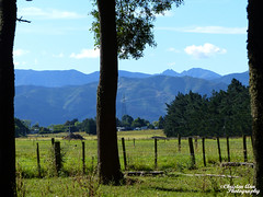 P1390768 (Christen Ann Photography) Tags: 2016 carterton christmas201617 christmasholidays december2016 gabby landscape nature newzealand plants wairarapa