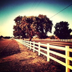 Fence (photographybyfrancisco) Tags: uploaded:by=flickrmobile flickriosapp:filter=mammoth mammothfilter