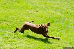 Speedy (jukkarothlauronen) Tags: dogs picnic event annual nääs