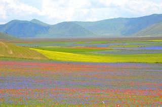 Un campo di colori - A colourful field