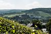 Schloss Hohenzollern (junghahn24) Tags: summer sun castle vineyard sommer vine schloss sonne burg wein weinberg fortresses rebe