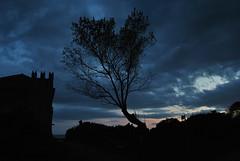 Santa Severa (1) (carlopiatti56) Tags: santa nikon nuvole cielo albero azzurro castello lazio severa