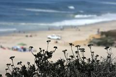 Pacific Ocean (The Dolly Mama) Tags: ocean sanfrancisco fog sailboat pacific bokeh huge