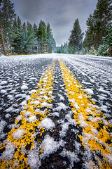 Snow-Covered Road in Yellowstone National Park (dfikar) Tags: road street trip travel autumn trees winter sky snow tree nature weather yellow horizontal rural forest season landscape drive countryside nationalpark woods frost snowy empty events country stripe center double fresh line covered yellowstone wyoming straight vanishing forward div