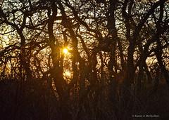 Sunset (Karen McQuilkin) Tags: trees winter sunset fall hike saltlake oaktrees karenandmc karenmcquilkin