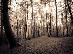 Darkness (David Cucaln) Tags: trees art backlight forest arboles darkness fine grain olympus bosque atmosfera fineartphotography grano bosc oscuridad montseny e510 2013 foscor cucalon atmosphera 1442mm davidcucalon
