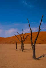 Dead Vlei (Kuba Abramowicz) Tags: world africa old travel blue trees sky color colour tree nature colors dead outdoors scenery colours outdoor dunes scenic national vista afrika pan namibia kuba namibian namib vlei namibnaukluft abramowicz lplasting