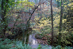 Tintern Woods (Ken Meegan) Tags: ireland tinternabbey cowexford saltmills tinternwoods 7122013