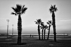 finikoudes- (big andrei) Tags: leica sea bw tree beach cyprus palm monochrom tri larnaca finicoudes