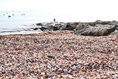Got Shells? (CapeCawder) Tags: shells seashells capecod beachphotography redriverbeach harwichma ononeperfecteffects nikond5300
