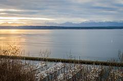 Shilshole Bay overlook (temaher) Tags: seattle sunset washington nikon pacificnorthwest wa pugetsound shilshole d7000