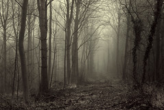 Sleepy Hollow Woods II (Ninja Dog - ) Tags: uk trees england mist woodland landscape march spring northamptonshire earlymorning 2014 geddington