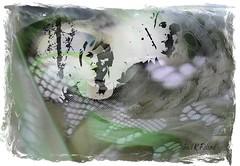 A couple (gailpiland) Tags: family people couple photoart soe hypothetical thegalaxy artdigital shockofthenew flickraward theperfectphotographer thebestofday awardtree gailpiland ringexcellence netartii artcityart