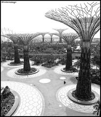 marina bay - metalic garden (freddorionimages) Tags: singapore singapour marinabay marinabaysands