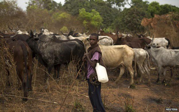 中非富拉尼人受到了驱赶