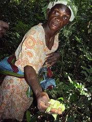 Uganda-19-019-Dingolo, a Mutwa elder, shows the group a medicinal herb from the forest-Credit FFI_P Wairagala (darwin_initiative) Tags: poverty forest wildlife conservation darwin environment uganda development biodiversity defra dfid