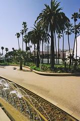 fountain and palm trees. (howard-f) Tags: film beach analog landscape kodak santamonica parks ishootfilm nikonfm2 fm2 expiredfilm nikonslr losangelesarea kodakgold400 urbanparks filmisnotdead nikkor2428ais filmwaster tongvapark