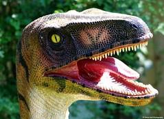 Dinosaur jurrassic world (Simon Dell Photography) Tags: sheffield northanston dinosaurtrexraptorjurrassicparkworldscarytropicalbutterflyhousewildlifeandfalconrycentrelargealternativezoowithwildlifeincludingmeerkatsprairiedogsandbirdsofpreywoodsettsrd southyorkshires254eqnatureukenglandwildlifeanimalsphotographysimondell2015